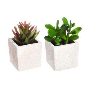 Artificial Succulents in Square Pots - Set of 2